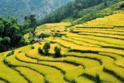 Tharpu-en-route-kanchenjunga