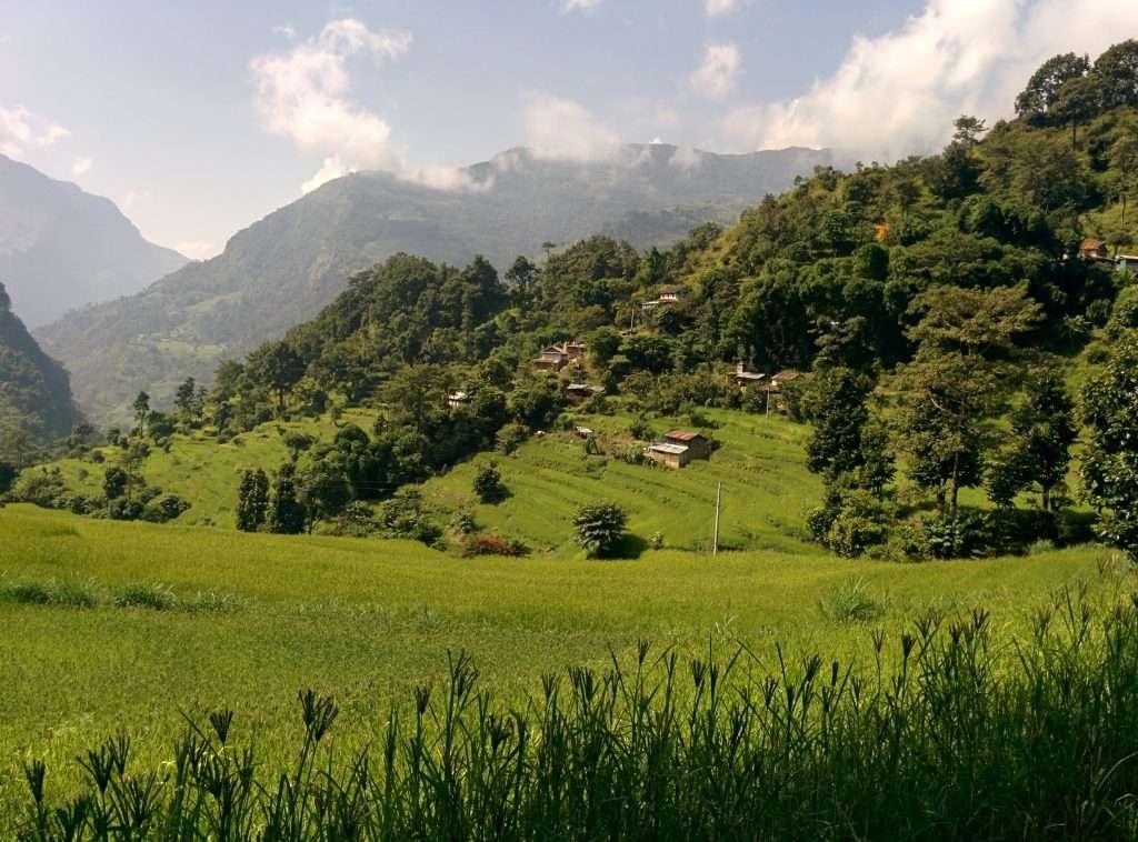 Rice terrace in annapurna